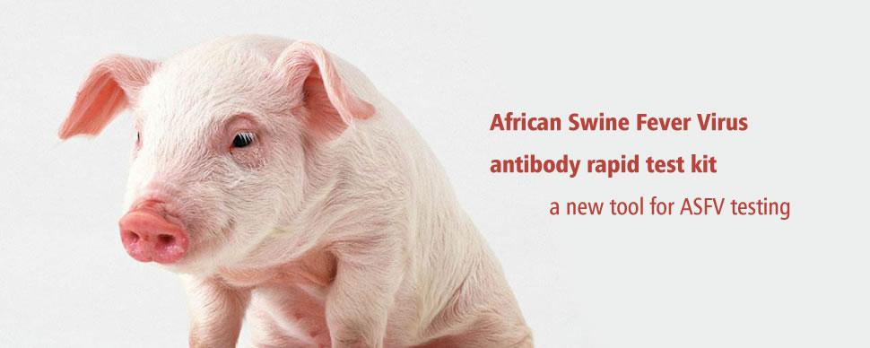African Swine Fever Rapid Test