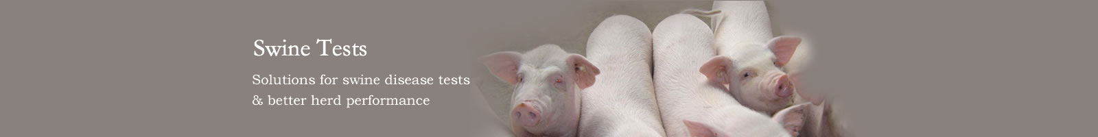 Swine Tests to identify swine diease and pregnancy